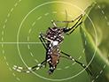O verão está chegando e o cuidado contra o mosquito Aedes deve aumentar