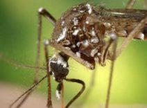Republicada Deliberação CIB que organiza linhas de cuidado e define critérios de repasse para assistência à Dengue